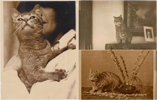 Ретро-фотографии с котиками