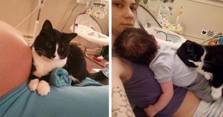 Трогательная привязанность кошки к малышу с пеленок