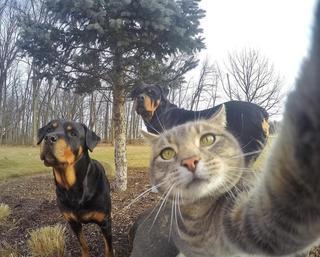 Селфи-кот запилил новые фотки