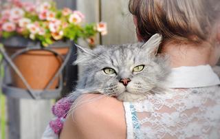 Почему кот вам совершенно необходим