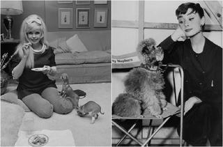 Знаменитости с любимыми собаками
