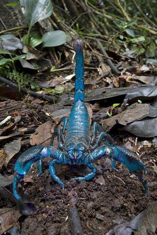 20 самых необычных животных, найденных за последние 20 лет
