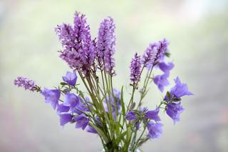 Фиолетовое настроение: 20 снимков с одними из самых загадочных и таинственных цветов, которые так часто встречается в окружающей среде