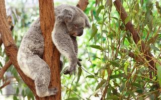 Рекордсмены животного мира по продолжительности сна