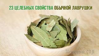 23 полезных свойства обычной «лаврушки»