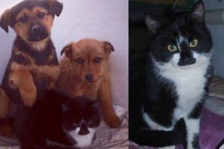 Необыкновенная история щенков и их приёмной «мамы»
