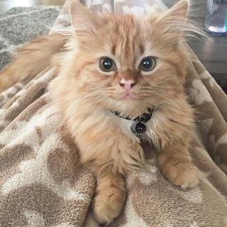 Улыбнись миру и он улыбнётся тебе или история одной кошки
