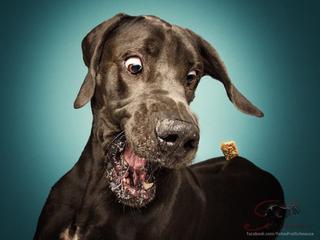 17 фото собак, которые пытаются поймать в воздухе брошенное им угощение