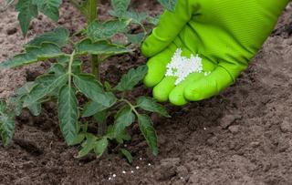 Летние подкормки овощных культур в открытом грунте