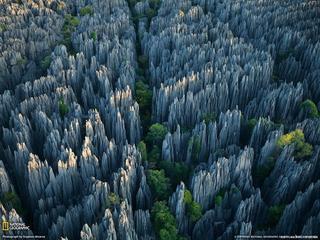 Удивительный каменный лес