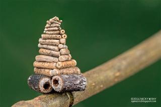 Удивительные архитектурные способности насекомых