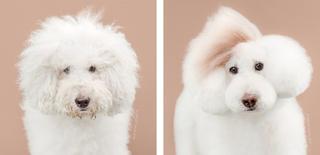 8 чудных собак разных пород до и после посещения грумера