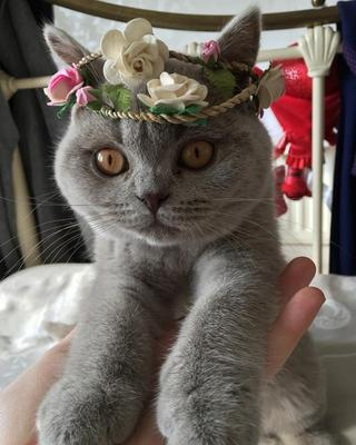 18 фотографий милых домашних котов, которые вызывают безграничное умиление