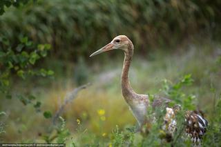 Красота природных заповедников Амурской области