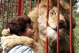 Подборка фото с животными