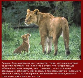 Самые непутевые мамаши в мире животных