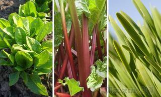 Что посадить в огороде в июле?