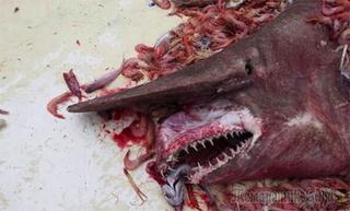 Дары моря: морские чудовища, случайно попавшие в сети