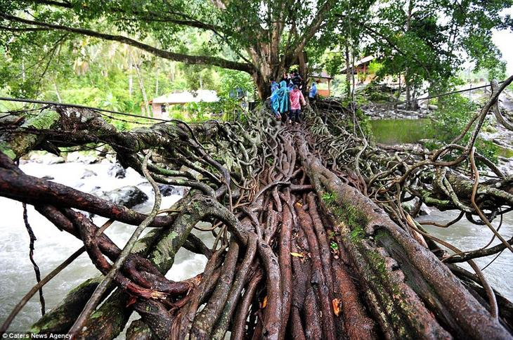 13. Мост из корней деревьев, на строительство которого ушло 26 лет. Местные жители просто направляли корни в нужном направлении. интересное, фото