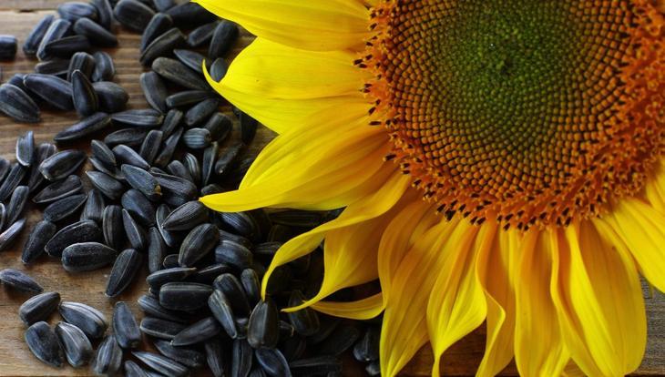 Розмарин – мощный антиоксидант рекомендации