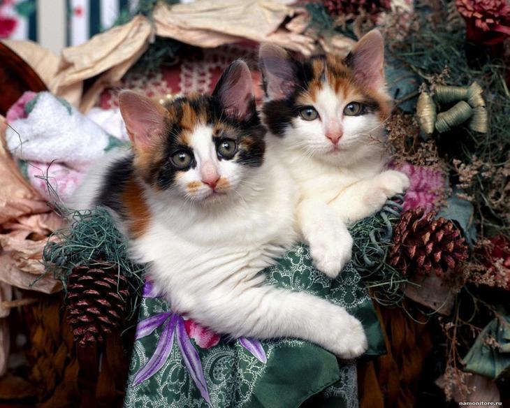 10. животные, коты, юмор