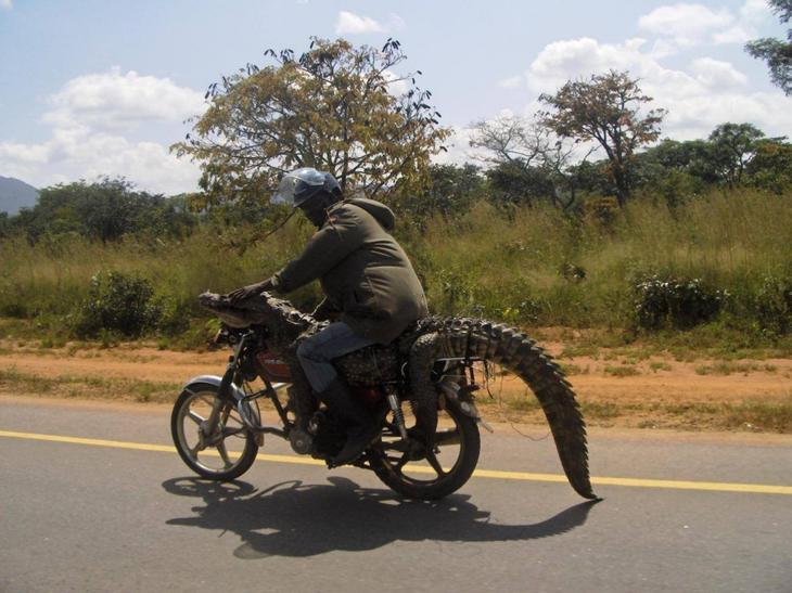 Такое увидишь только в Африке смешные, только в африке, удачный кадр, юмор