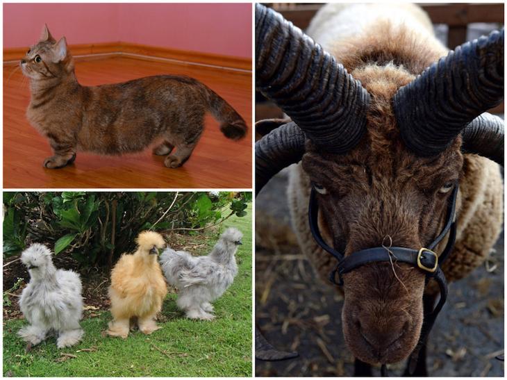 10 очень странных пород обычных животных животные, необычные животные, природа
