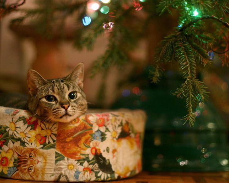 18. животные, коты, юмор