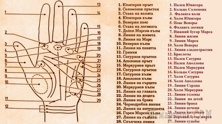 Как по линиям на руке прочитать свою судьбу