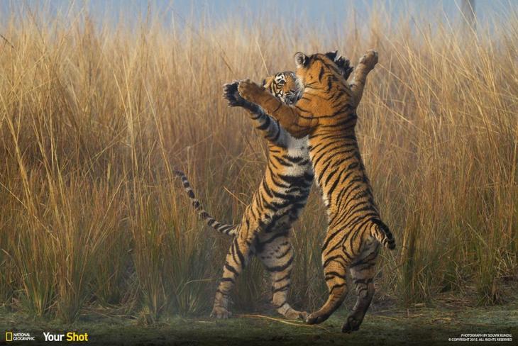 Подборка лучших фотографий, опубликованных журналом National Geographic в 2015 году