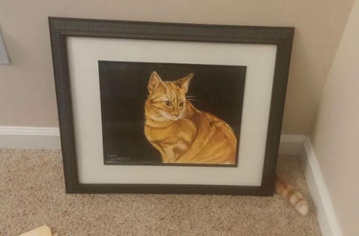 5. Очень стеснительный кот прикол, фотки, юмор