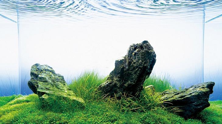 Аквариум в интерьере: интересные идеи: <b>Художественный аквариум</b>. Такаши Амано – дизайнер, фотограф и аквариумист.  Он открыл аквариум Aqua Design Amano, где представил свою концепцию