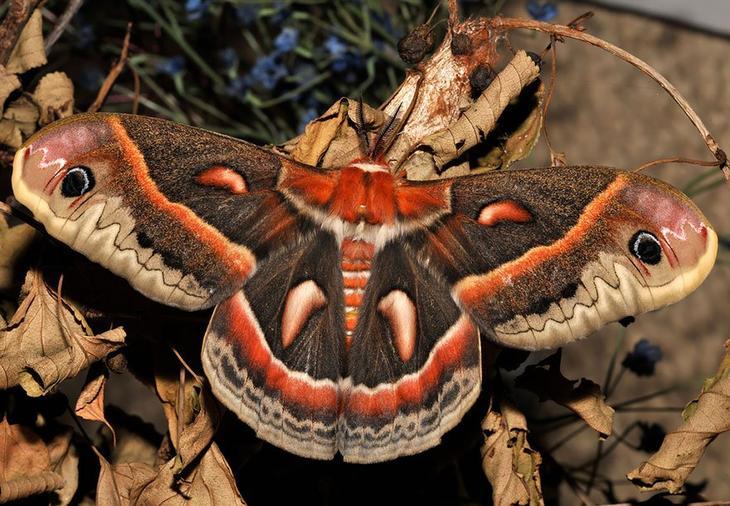 caterpillar-moth-butterfly-before-after-metamorphosis-6-2