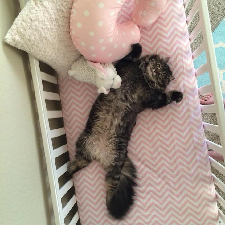 1. Так, этот кот решил, что ему купили новую кроватку год, кот, событие