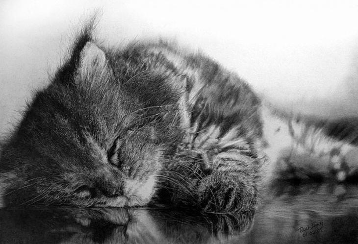 drawncats01 Мастер карандашного наброска   Пол Ланг