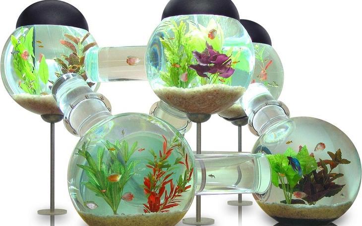 Аквариум в интерьере: интересные идеи: <b>Аквариум-лабиринт</b> – это целая система аквариумов. Без сомнения, он великолепен. И поскольку его цена $6,500, в комплекте с ним должен