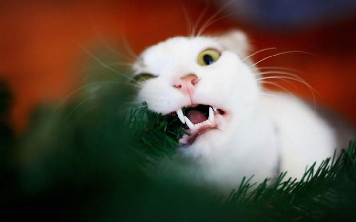 4. животные, коты, юмор