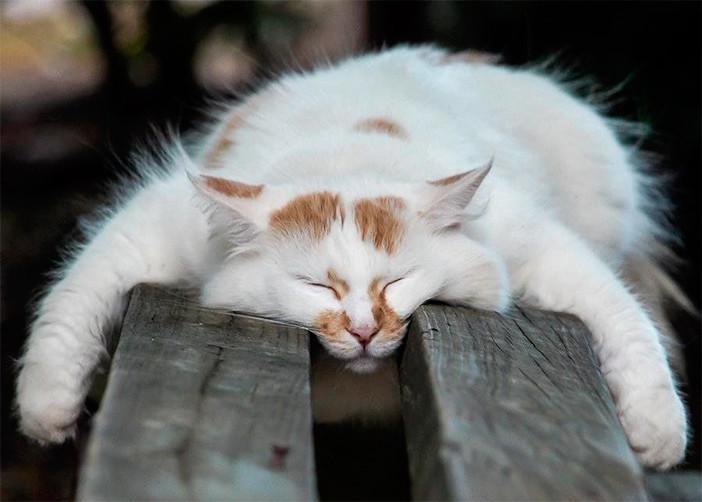 Кисы, которые умеют спать неповторимо