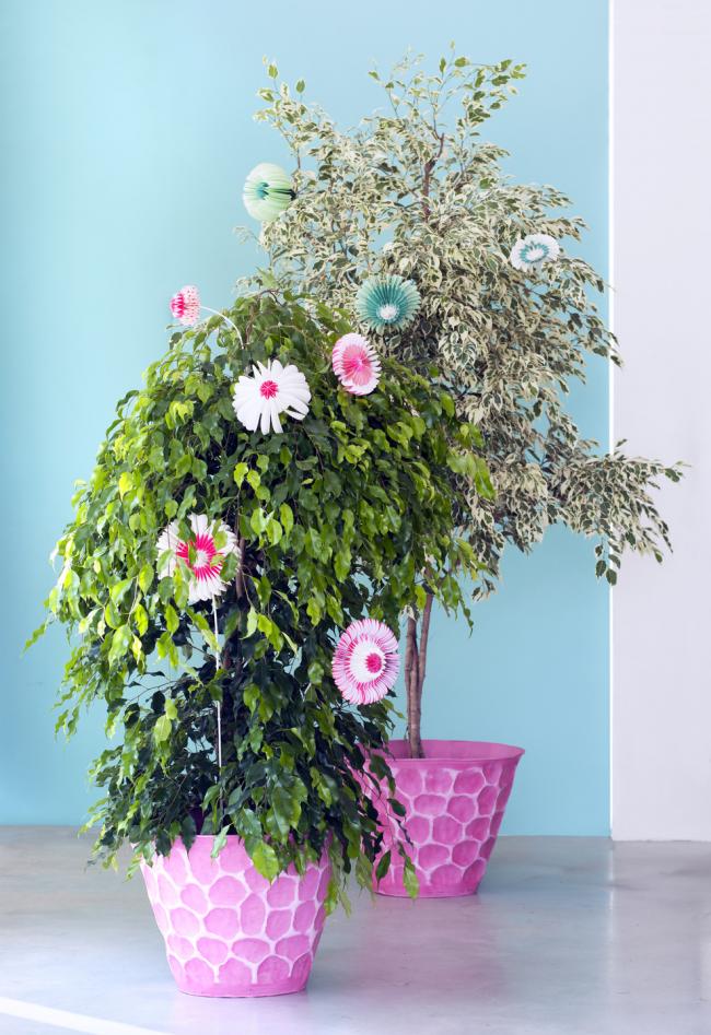 Пересаживать цветок из транспортировочного горшка можно через 2-3 недели, так он лучше адаптируется к окружающей среде