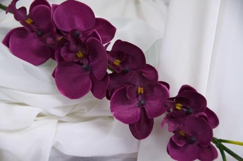 Бордовая орхидея фаленопсис