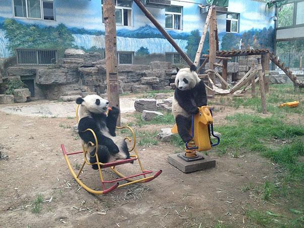 смешные животные которые ведут себя как люди (2)