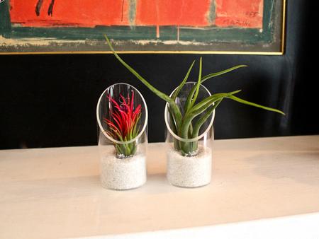 «Воздушные» растения: 14 забавных идей для дома фото 4