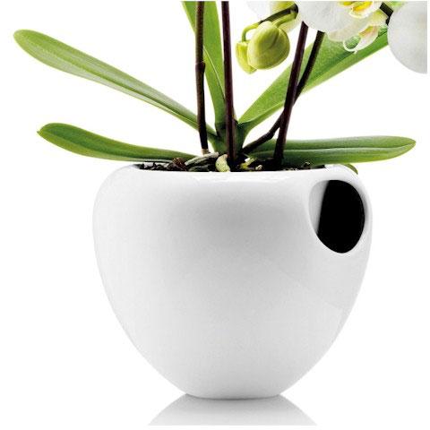 Как разместить орхидею в интерьере