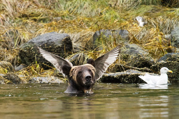������� �� ����� �������� ���� ����� �������� The Comedy Wildlife Photography Awards 2016
