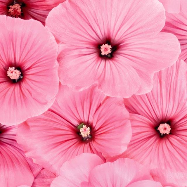 10 оттенков розового: лучшие лаки