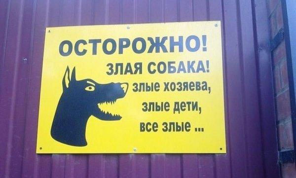 Осторожно собака злая а кот вообще дебил картинка