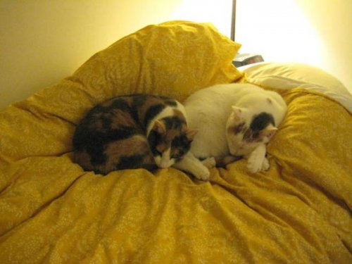 Кошки-сёстры, которые всё делают синхронно (13 фото)