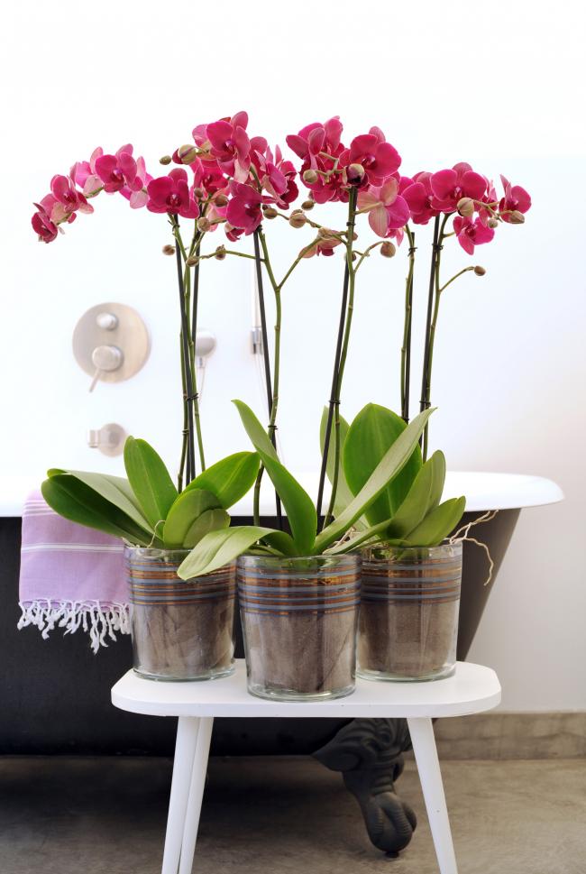 Невероятно нежная композиция из розовых орхидей в стеклянных горшках