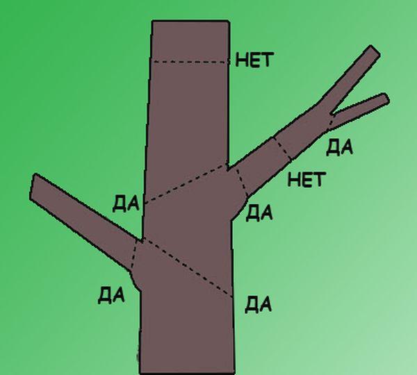 Схема обрезки комнатного растения
