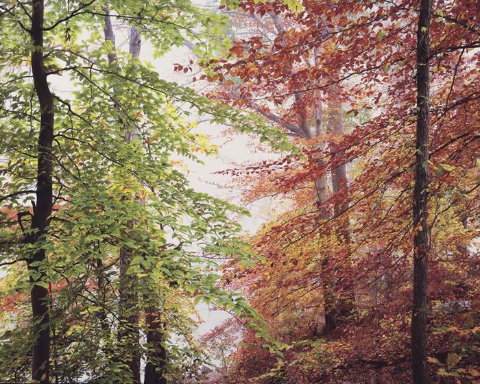 Осенний лес, штат Огайо,  2014 год. Автор: Christopher Burkett.